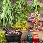 صادرات برخی از گیاهان دارویی ممنوع شد
